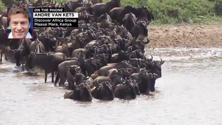 بالفيديو.. هجرة الحيوانات الكبرى مباشرة على الانترنت