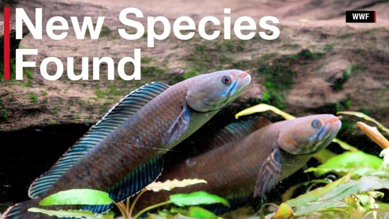 بالفيديو.. اكتشاف أكثر من 200 صنف من الحيوانات في الهملايا