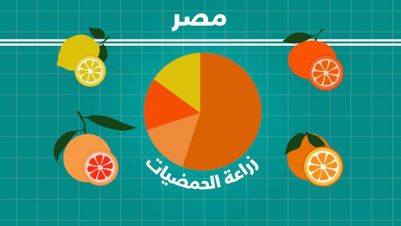 إنتاج الحمضيات في مصر من الأكبر في إفريقيا