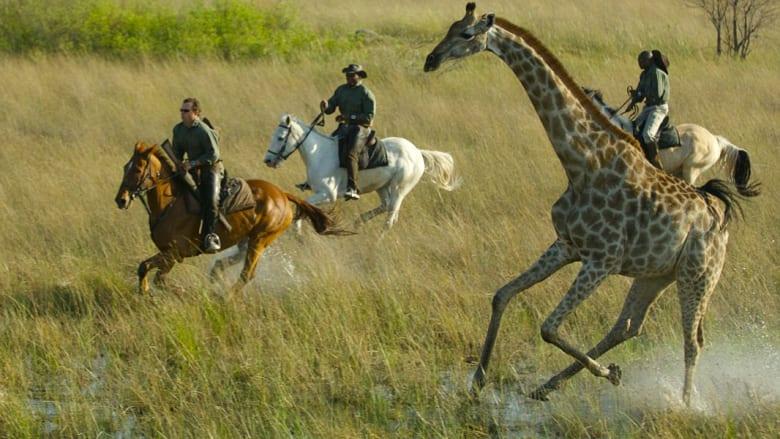 الترحال على ظهر الأحصنة..مغامرات لا تُنتسى في مجاهل الطبيعة