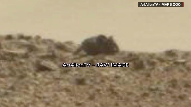 بالفيديو.. ما حقيقة صورة فأر على سطح المريخ؟