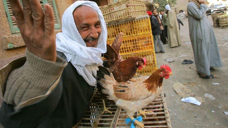 """ذعر """"أنفلونزا الطيور"""" يتجدد بمصر والحكومة تعلن رصد 370 """"بؤرة إصابة"""" خلال 2015"""