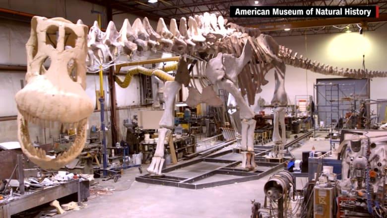 بالفيديو: تعرف إلى أكبر الديناصورات في العالم… التيتانوصور