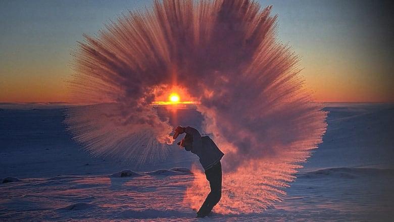 الحياة البرية بأبهى صورها في القطب الشمالي