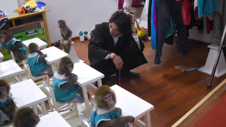 مدرب أمام مجموعة من القرود