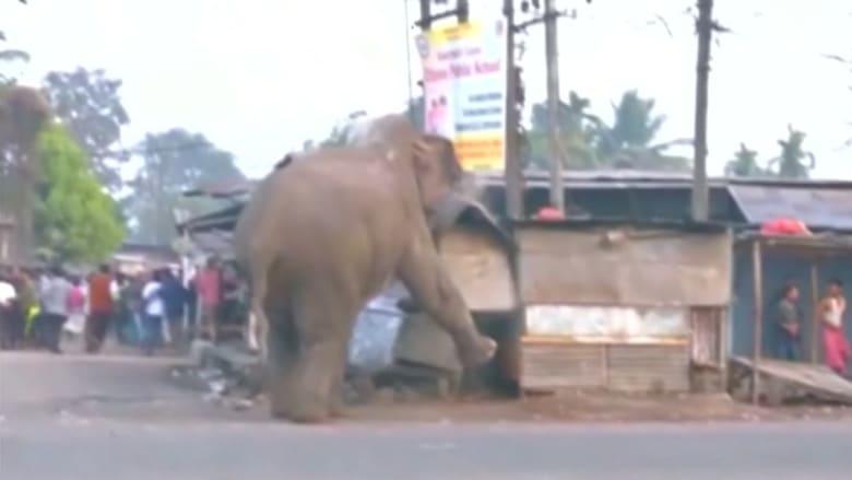 فقط في الهند.. فيل غاضب يدمر 100 منزل ومتجر