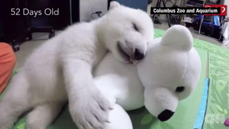 بالفيديو: ما الاسم الذي حصلت عليه صغيرة الدب القطبي؟