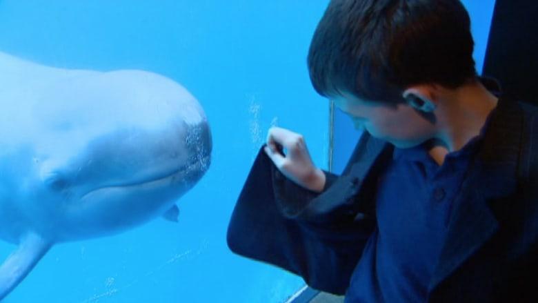 شاهد.. صداقة فريدة بين طفل وحوت في كندا