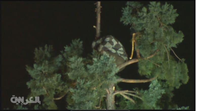 مشهد غريب.. رجل يجلس على غصن شجرة شاهقة لساعات في سياتيل