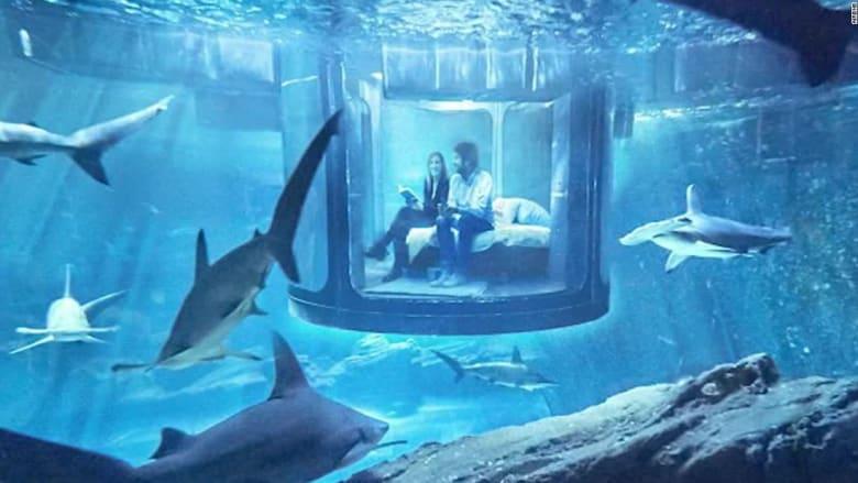 هل تحب تجربة أقصى أنواع المغامرة؟ جرّب هذه الغرفة للنوم وسط أسماك القرش