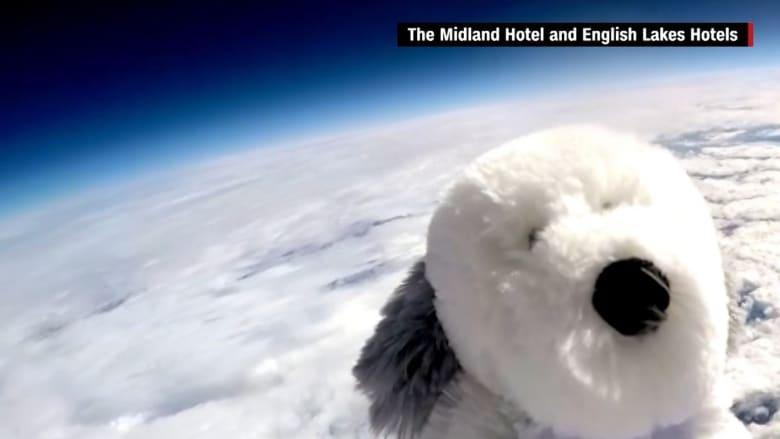 مهمة فضائية على مستوى مختلف.. بطلتها أول دمية كلب تصبح رائدة فضاء