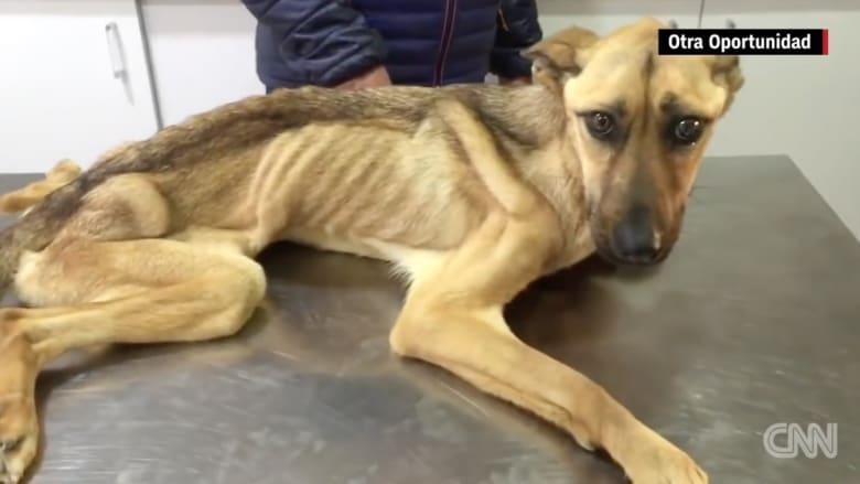 بالفيديو: كلبة تتعافى من سوء التغذية