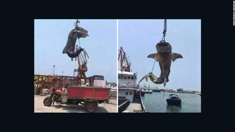 """بالفيديو: شنق """"القرش الحوت"""" في الصين يثير موجة غضب"""