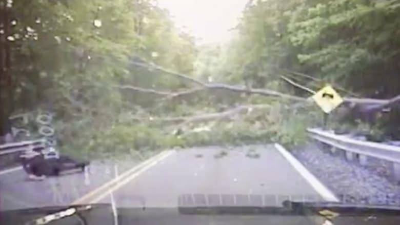 بالفيديو: شجرة تسقط على ضابط شرطة حاول إزاحة فرعها