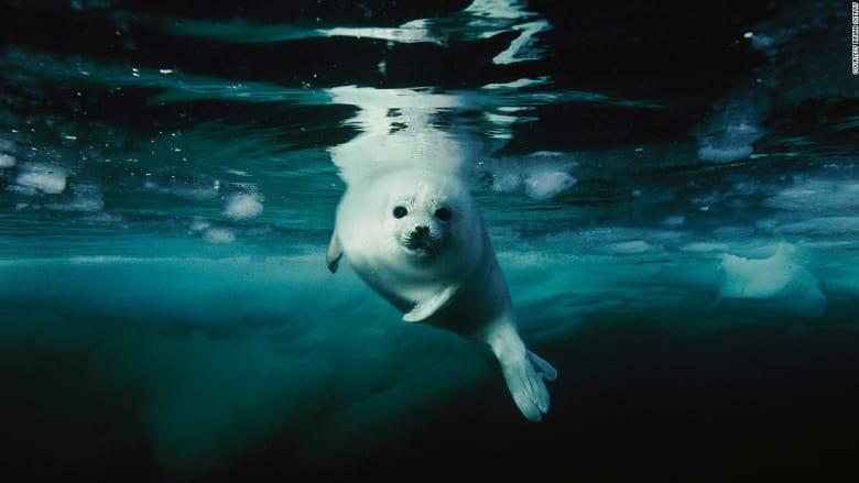 هذه أسرار فن التصوير تحت الماء