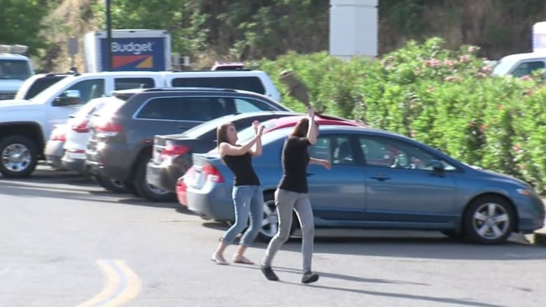 شاهد.. طيور سوداء تهاجم المارة في شوارع كاليفورنيا