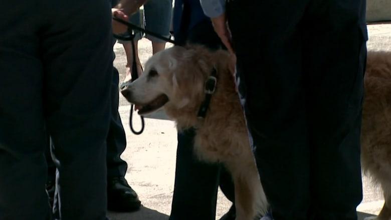 نفوق آخر كلبة شاركت في عمليات البحث والإنقاذ بهجمات 11/9