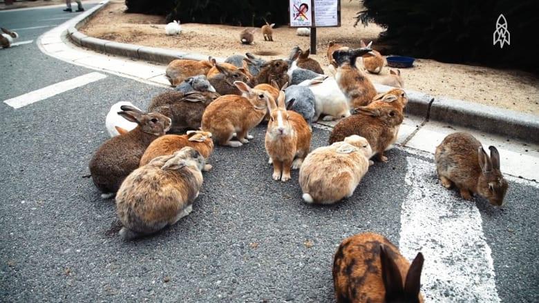 ما هو لغز جزيرة الأرانب اليابانية؟