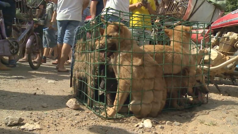 بالفيديو: مهرجان أكل لحم الكلاب في الصين يسبب غضباً عالمياً