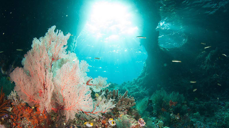 اكتشفوا هذا العالم الخيالي في قاع بحار إندونيسيا