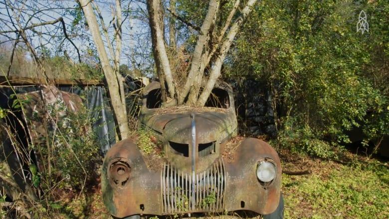 أهلاً بكم في غابة من السيارات القديمة المنسية