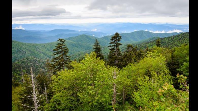 غابة أمريكية تتحول إلى أرض أشباح..والسبب؟