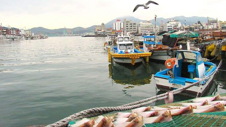 شواطئ ومأكولات بحرية وجزر.. هنا بوابة كوريا الجنوبية البحرية