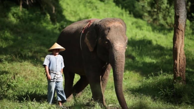 اللعب مع الفيلة.. فقط في هذا المخيم الفاخر