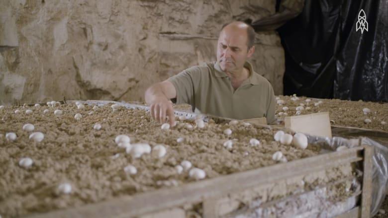 تعرف إلى آخر مزارع الفطر التقليدية تحت الأرض