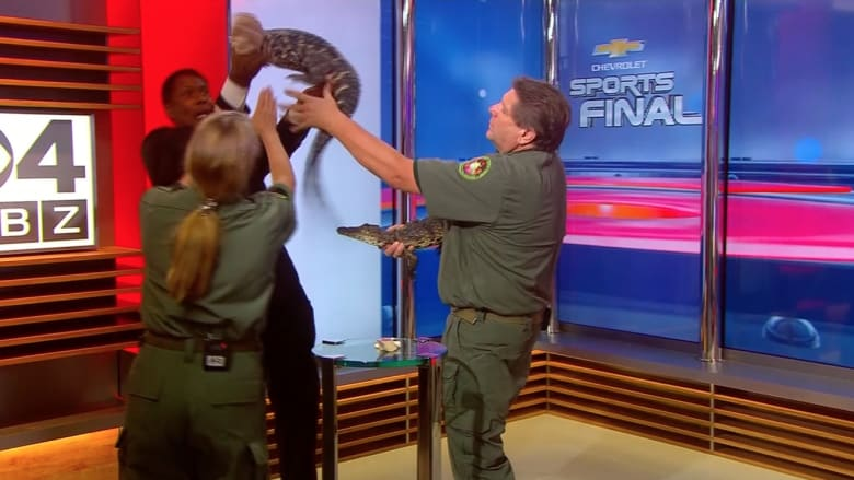 شاهد.. تمساح صغير يهدّد حياة مقدم برامج على الهواء مباشرة