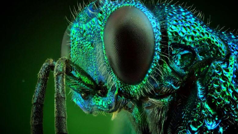 شاهد الجمال الخلاب لوحوش.. من عالم الحشرات