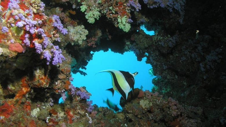 يا مسافر وحدك.. جزر المالديف خيارك