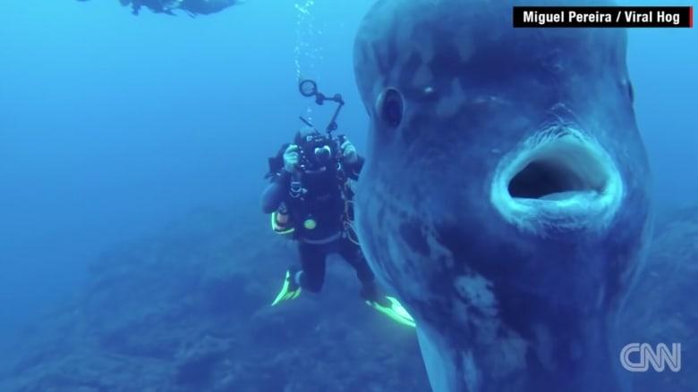 """شاهد """"اللحظة الأكثر إثارة"""" مع سمكة شمس عملاقة"""