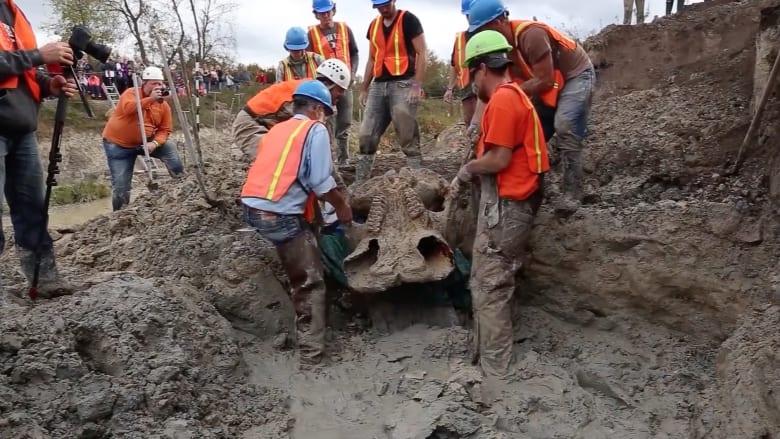 """علماء يعثرون على أكثر هيكل عظمي مكتمل لفيل """"الماستدون"""" المنقرض"""