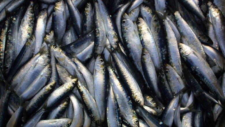 أيامًا على مقتل محسن فكري.. أسعار السمك تنخفض بشكل ملحوظ في الحسيمة