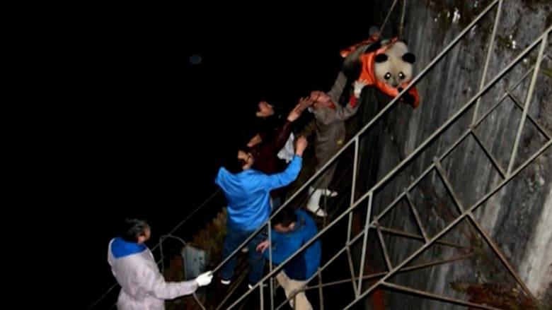 إنقاذ باندا برّي سقط في محطة للطاقة الكهرومائية