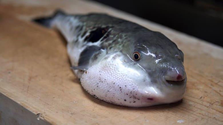 """هكذا يقدّم سمك """"فوغو"""" السام.. هل تجرؤ على تجربته؟"""