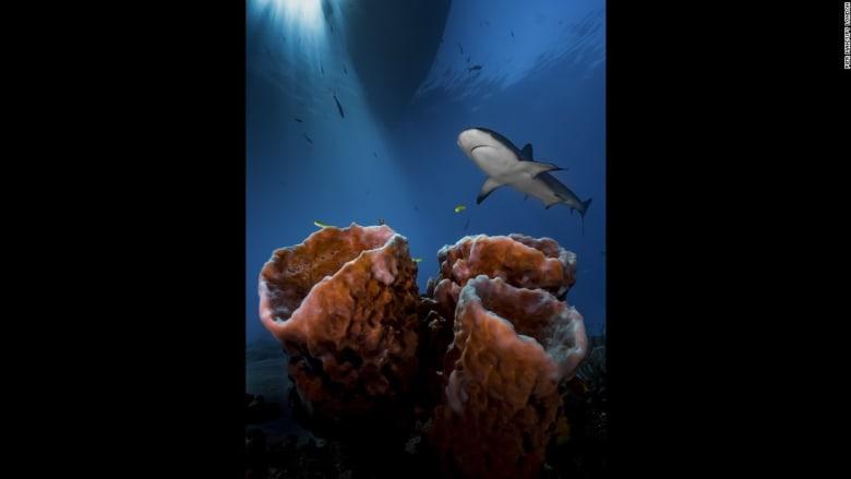 عالم البحار كما لم تره من قبل... أفضل الصور الفوتوغرافية تحت الماء للعام 2016