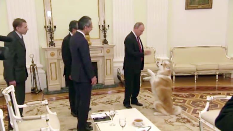 من هو كلب الكرملين الذي يزعج الناس؟