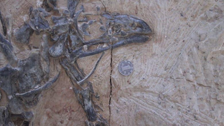 تعرف على الديناصور الذي فقد أسنانه