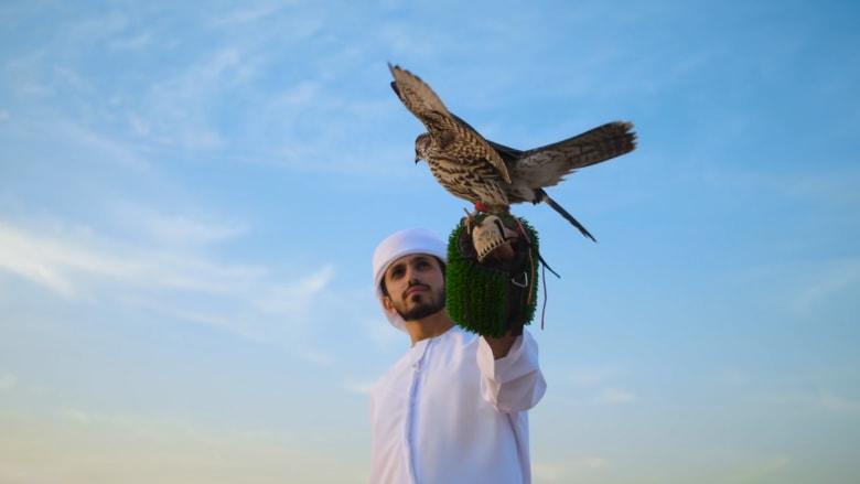 كيف تُدرب الصقور للسباقات في دبي؟
