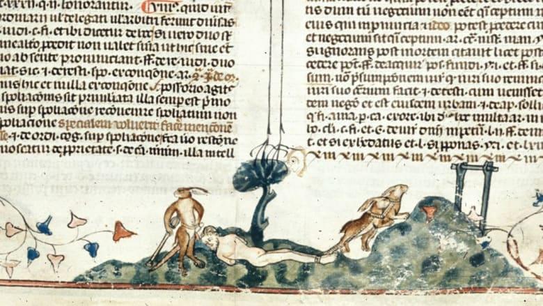 هل كانت الأرانب ستقضي على البشر والحيوانات تاريخياً؟