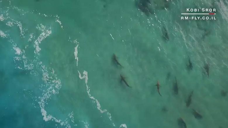 أسماك القرش تحتشد على ساحل إسرائيل