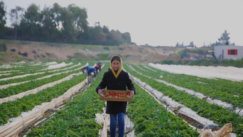 """إليكم """"فاكهة الحب"""" من قطاع غزة"""