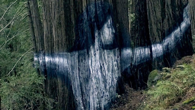 جداريات سرية مذهلة في الغابات تبعث رسالة مخيفة حول تغير المناخ