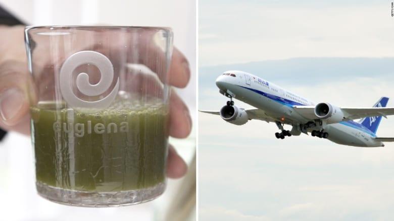 كيف تمكنت هذه الشركة من تحويل الطحالب إلى وقود للطائرات؟