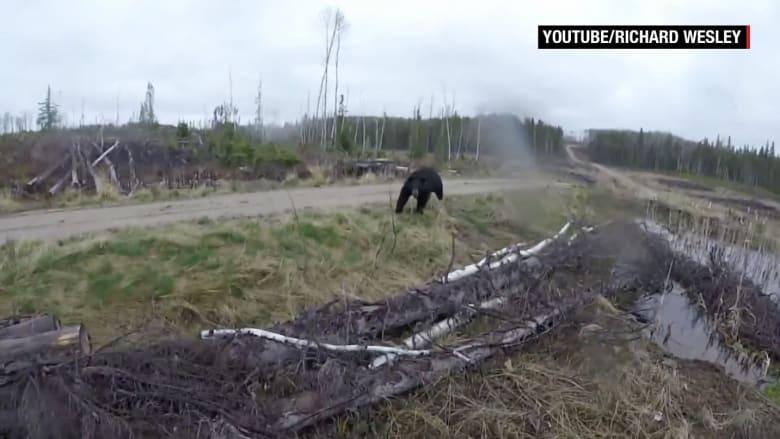 صياد يصور لحظة تعرضه لهجوم من دب أسود