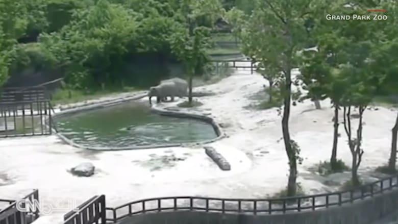 شاهد كيف أنقذت هذه الفيلة صغيرها من الغرق