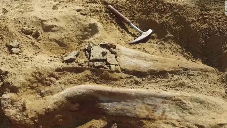 شاهد.. عمال بناء يعثرون على بقايا ديناصور عمره 66 مليون عام