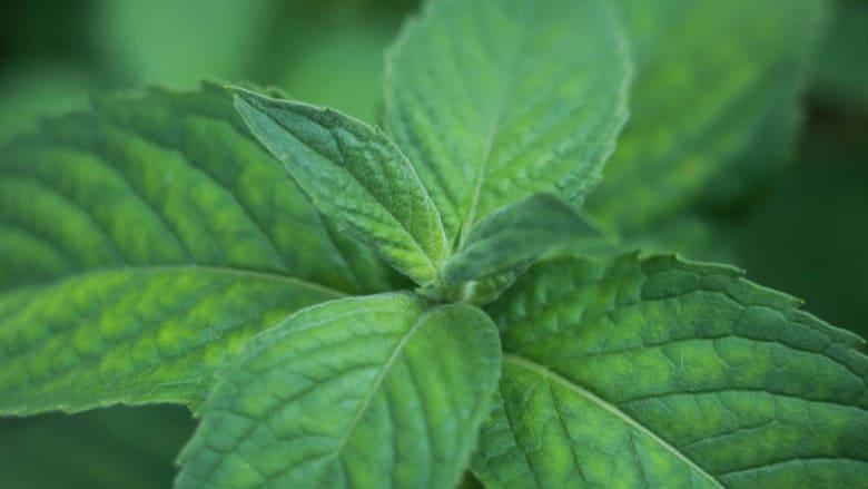 تعرّف إلى هذه التوابل والأعشاب لمحاربة السرطان